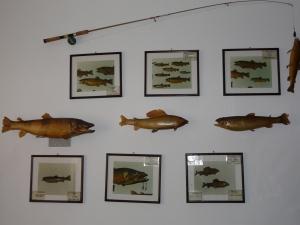 Stenska zbirka rib